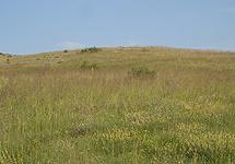 Semi-natural dry grasslands