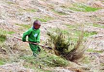 5 years old boy turning hay