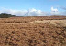 North Atlantic Wet Heaths (4010)
